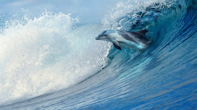 An Awesome Wave - dolphin