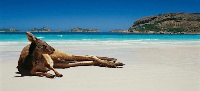 Down Under - roo beach