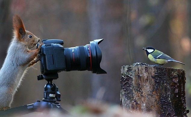sqirrel with camera