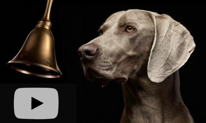 bell + pooch